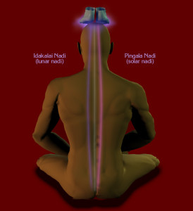 Illustraion of the primary nadis of Kriya Yoga