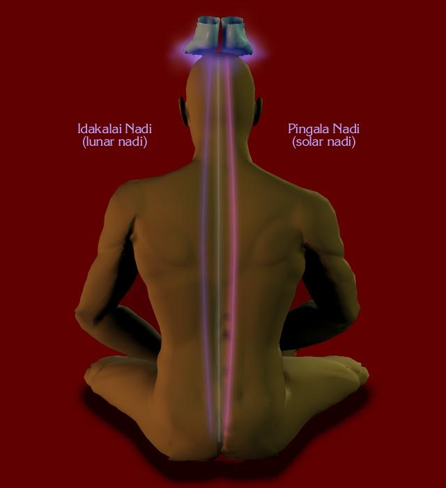 Illustraion of the primary nadis of Kriya Yoga